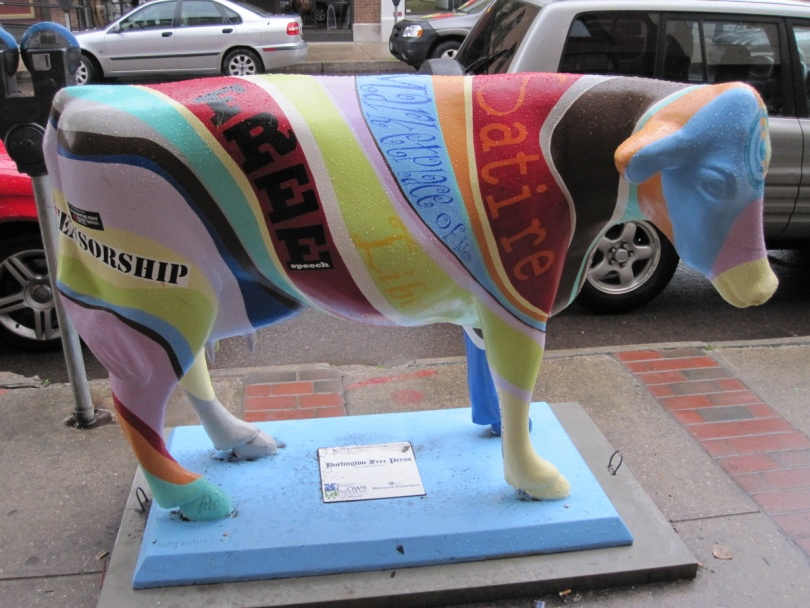 burlington-cow