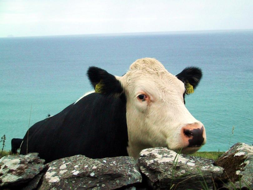 cow-side-auto-levels-sat-plus-10
